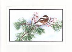 Petit oiseau sur branche de pin