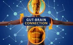 5 Brain and Mental Health Conditions Linked to Your Gut - The Best Brain Possible Healthy Brain, Brain Health, Gut Health, Health Facts, Dr John Bergman, Watermelon Nutrition Facts, Gut Brain, Brain Food, Brain Connections