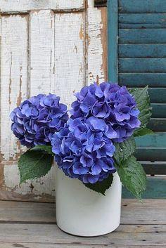 a blue hydrangea bouquet
