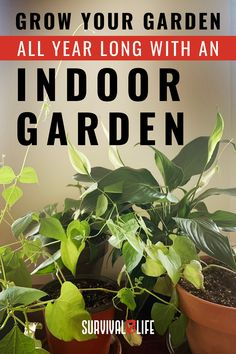 Get started with indoor gardening this fall, and don't let the cold weather stop you from growing your favorite herbs! #indoorgardening #gardeningtips #gardening #survivaltips #survivallife Survival Hacks, Survival Life, Indoor Gardening, Gardening Tips, Grow Your Own, Garden Planning, Step By Step Instructions, Home Remedies, Natural Health