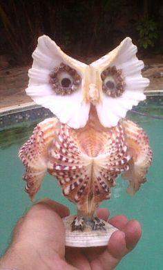 Owl made with seashells
