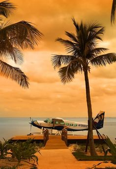 Island float plane and palms Magic Places, Float Plane, Plane Ride, Rio Grande Do Sul, Le Far West, Photos Of The Week, Palm Trees, Places To See, Beautiful Places