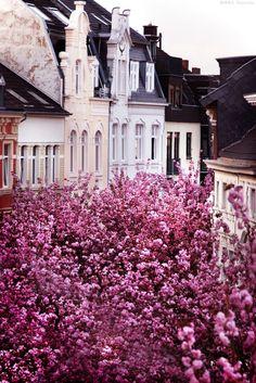 { travel :: beautiful blooms + pastel exteriors, bonn, germany }