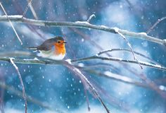 Rouge Gorge sous la neige by Bertrand Bayer, via 500px