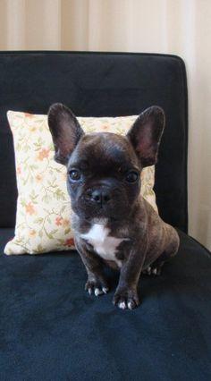 aww big ears