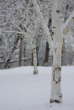 white on white by paulj.hastings