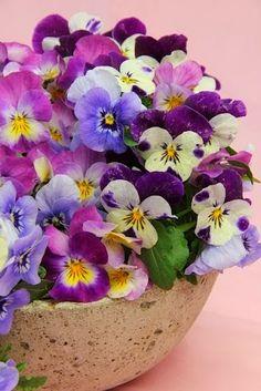 Viola Tricolor Tattoo