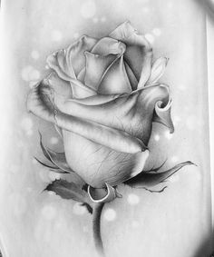 Learn To Draw A Realistic Rose - Drawing On Demand Rose Drawing Tattoo, Tattoo Sketches, Tattoo Drawings, My Drawings, Tattoo Ink, Badass Tattoos, Body Art Tattoos, Tattoo Fleur, Flower Sketches