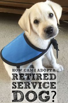 How can I adopt a retired service dog? @puppy