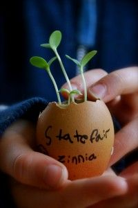 Planting my seeds in an egg shell.