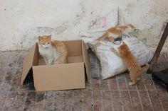 Cat in box, Kittens on bag