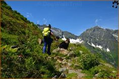 www.dogwalktrail.com hond mee op vakantie Zell Am See, Mountains, Nature, Travel, Instagram, Kaprun, Naturaleza, Viajes, Destinations