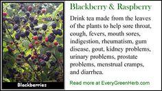 Blackberry leaf tea helps sore throat - read more at http://www.everygreenherb.com/blackberry.html