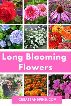 Blooming Flowers For Months of Color Long Blooming Flowers You'll Love - Add these plants to your landscaping this year for months of blooms! Long Blooming Flowers You'll Love - Add these plants to your landscaping this year for months of blooms! Flowers Perennials, Planting Flowers, Flowers To Plant, Part Sun Perennials, Perrenial Flowers, Indoor Flowers, Shade Perennials, Vegetable Garden, Garden Plants