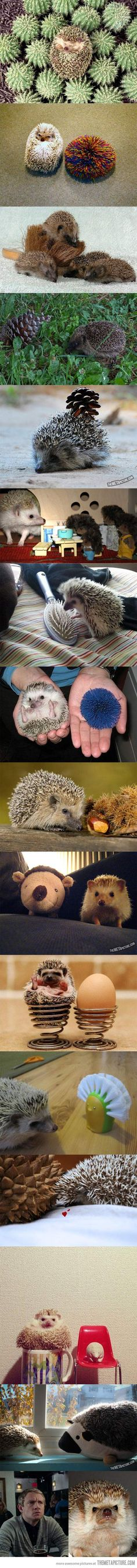 16 hedgehogs with things that look like hedgehogs… I don't see he difference between the pictures! Haha!