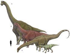 1. Brachiosaurus altithorax 2. Camarasaurus sumpremus 3. Diplodocus longus 4…