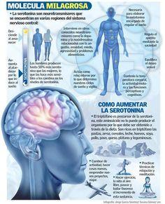 Qué es la serotonina y cual es su función. #salud #serotonina #infografia