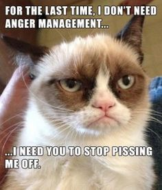 pissed off cat 1