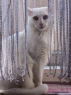 Der Blick von Syrahs Kater Paul hat etwas Hypnotisierendes, findet ihr nicht auch?