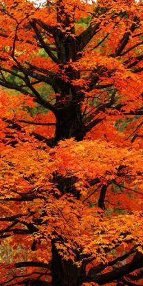 Orange wood
