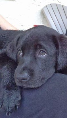 5 Amazing pics for labrador lovers, I would suggest you to see them all :)