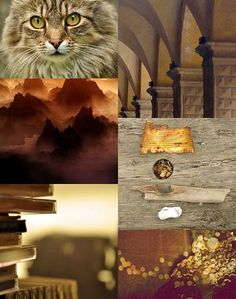 Gold & Brown [Friday Flickr Photo Collage] | Flickr - Photo Sharing!
