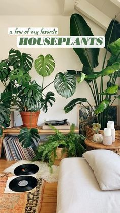House Plants Decor, Plant Decor, Potted Plants, Indoor Plants, Rubber Tree, Money Trees, Diy Garden Projects, House Rooms, Houseplants