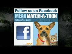 24-hour MegaMatch-A-Thon March 30 11:59PM to March 31 11:59PM Tropical Park. Find a furever friend.