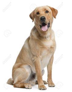 perro sentado - Buscar con Google