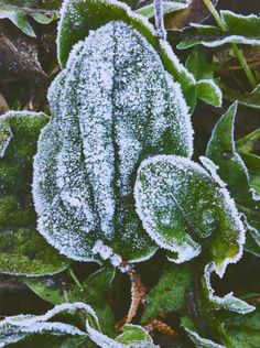 #green #nature #frozen #winter #cold #plant #beauty #snow #beauty #love