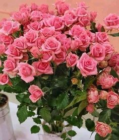 Beautiful Flower Quotes, Beautiful Rose Flowers, Love Rose, Flowers Gif, Real Flowers, Silk Flowers, Garden Bulbs, Rose Pictures, Luxury Flowers