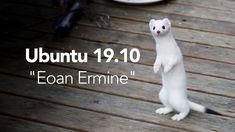 Ubuntu 19.10 Codename Revealed: Eoan Ermine. Cute Baby Animals, Ecology, Cute Babies, Pets, Auras, Software, Youtube, Animales, Funny Babies