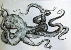 Octopus Tentacles Wrapped Around An Anchor Drawings