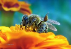 entertainer bee by karayelim on 500px