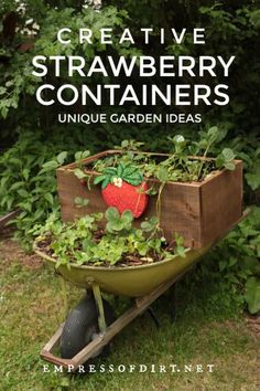 There are many creative ways to grow strawberries in containers including repurposing wood pallets, wreath forms, old wheelbarrows, and more.