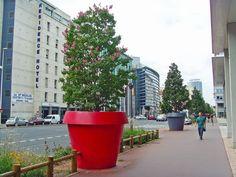 Jakie rośliny dla miejskich donic? | Inspirowani Naturą I best flowers for large flower pots in cities