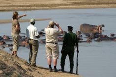 Guided walking lead you to the edge of lagoons where hippos & crocodiles laze in the sun - Lion Camp, - ©Dana Allen Wildlife Tourism, Audley Travel, Safari Holidays, Travel Sights, Victoria Falls, Cheetahs, Crocodiles, Wild Dogs, Camping Activities