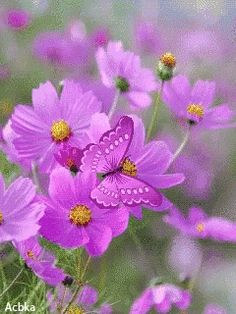 With Tenor, maker of GIF Keyboard, add popular Flowers animated GIFs to your conversations. Share the best GIFs now >>> Flowers Gif, Rare Flowers, Butterfly Flowers, Beautiful Butterflies, Beautiful Birds, Butterfly Background, Butterfly Wallpaper, Cherry Blossom Flowers, Lavender Flowers