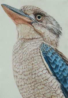 Blue winged kookaburra II 30 x 21 cm Pastel on handmade paper sold Australian Animals, Australian Art, Pastel Drawing, Pastel Art, Pastel Paintings, Bird Drawings, Animal Drawings, Bird Artwork, Color Pencil Art