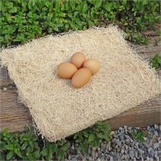 Excelsior Nest Box Pad 13 x 13 (Set of 10) Bird Cage Stand, Hatching Chickens, Chickens Backyard, Pet Chickens, Raising Chickens, My Pet Chicken, Chicken Coop Signs, Best Chicken Coop, Cheap Chicken Coops
