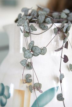 String of Hearts Vine. Need to check our Home Depot or Lowes for some! So beautiful and great for hanging spaces.