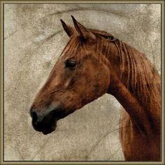 Crackled Horse 3