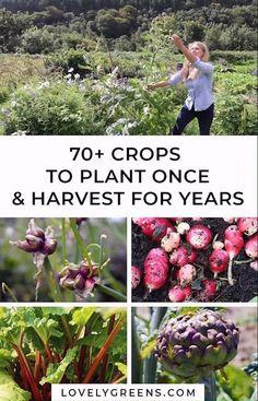 Backyard Vegetable Gardens, Veg Garden, Vegetable Garden Design, Outdoor Gardens, Magic Garden, Forest Garden, Perennial Vegetables, Growing Vegetables, Edible Plants