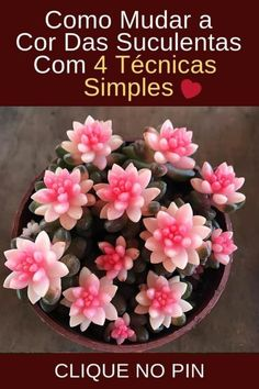 Plantar, Cactus, Succulents, Garden, Flowers, Bts, Food, Colorful Succulents, Hanging Plants