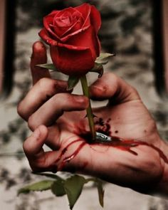 This image shows two sides of a rose; one that it represents love and the lower side which is full of thorns and pointed stem. This image shows betrayal comes only from people that are close and sweet to us, because if they are not close betrayal wont matter. The pain of betrayal is not less. Thus, blood shows how badly being betrayed hurts.
