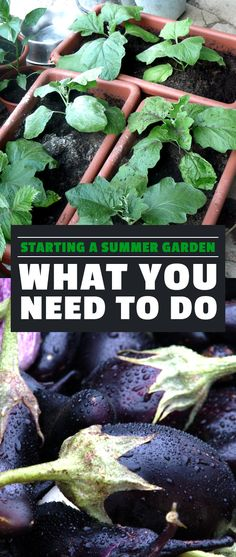 Summer's coming, so I'm starting a summer garden the Epic Gardening way. Check out how to start one in this post where I walk you though the process!