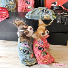 WOOFLINK - Hip & Cool designer dog clothes, pet bed, pet carrier and much more! Teacup Chihuahua Puppies, Cute Chihuahua, Cute Dog Clothes, Pet Dogs, Pets, Designer Dog Clothes, Dog Clothes Patterns, Dog Wear, Pet Costumes