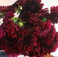 Dahlia- BurgundyDefault Title Burgundy Dahlia- will use in bouquets and in ceremony arrangements if available Dahlia Wedding Bouquets, Dahlia Bouquet, Diy Wedding Flowers, Dahlia Flower, Decor Wedding, Wedding Receptions, Dress Wedding, Wedding Centerpieces, Fall Wedding