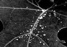 "Title: ""Natural pattern"". Leaf and raindrops"