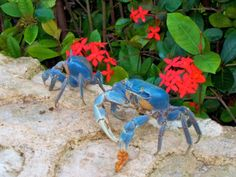 """Blue Crab-When one of the disciples made the request, show us the  Father,"""" Jesus answered, """"Have I been so  long time with you, and yet hast thou not  known me, Philip ? he that hath seen me hath  seen the Father; and how sayest thou then,  Show us the Father?"""""""